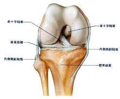膝の靭帯1