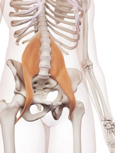 medically accurate muscle illustration of the psoas major